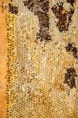 Culled old brood frame from honey bee hive with wax moth tunnels and webbing. Beekeeping. poster