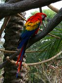Colorful macaw parrot sitting on a perch. poster