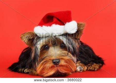 Xmas Dog Portrait