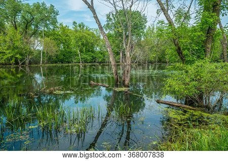 A Beautiful Reflection Of The Woodlands In The Wetland Of The Trempealeau Wildlife Refuge With Turtl