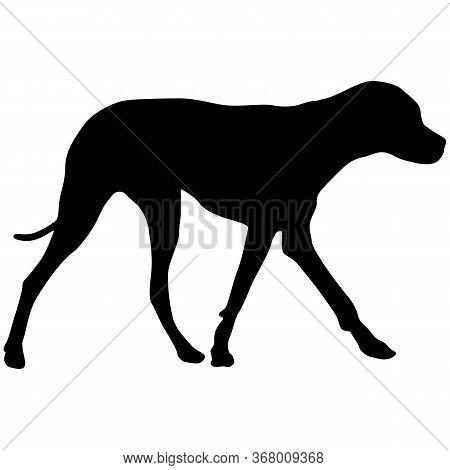 Doberman Pinscher Dog Black Silhouette On White Background