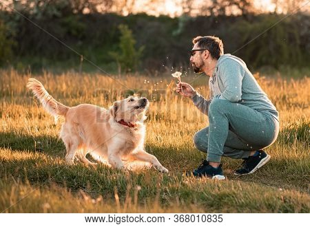 Bearded Man Playing With Big Golden Retriever Dog On Sunset. Guy Blowing Dandelion To His Dog For Fu