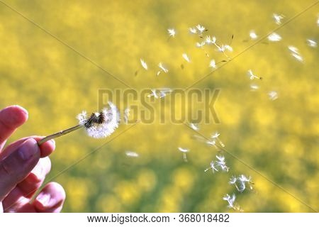 Woman Holding A Dandelion Flower And Blowing It On A Yelow Background During A Spring Day.