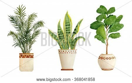 Watercolor Hand Drawn Illustration Elements Of Areca Parlor Palm Sanseviera Snake Plant Fiddle Leaf