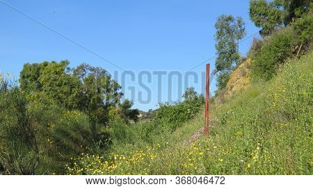 Meadow Flowers And Rusty Pole