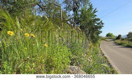 Plants On Roadside Verge