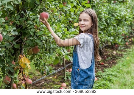 Cute Little Girls Portrait In Apple Orchard.
