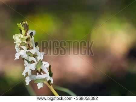 Green Spring Forest Background. Bloom White Flower