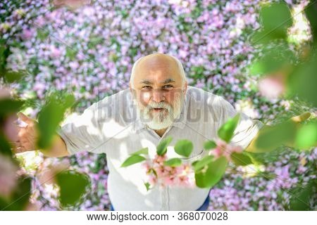 Positive Emotions. Good Mood. Happy Old Age. Mental Health. Happy Man Under Sakura Tree Looking Upwa