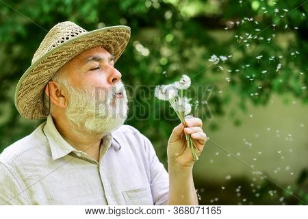 Harmony Of Soul. Elderly Man In Straw Summer Hat. Grandpa Senior Man Blowing Dandelion Seeds In Park