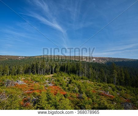 Mountain Ridge, With Small Trees And Colorful Vegetation In The Foreground, Jeseniky, Czech Republic