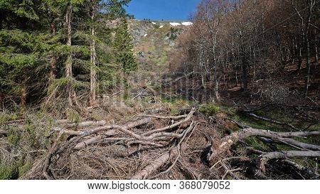 Fallen Trees In Avalanche Area, Velky Kotel, Jeseniky Mountains,czech Republic
