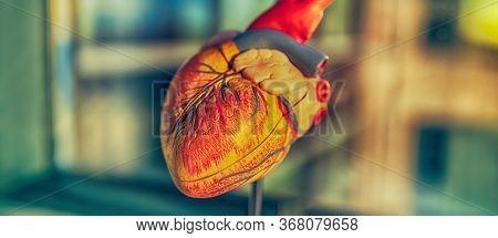 Coronavirus heart failure symptom of COVID-19, cardiovascular disease medical heart model banner. Panoramic of risk of stroke blood clot with corona virus infection.