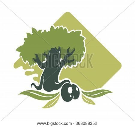 Olive Tree And Berry With Leaves, Plantation Banner