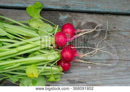 Radishes On A Wooden Table ,food, Red Radish, Fresh