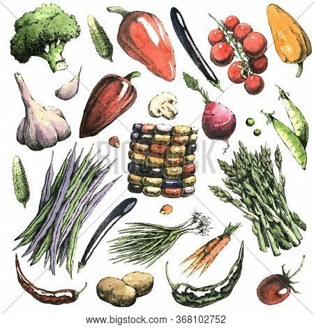 Watercolor Hand-drawn Set Of Vegetables. Jpeg Only.