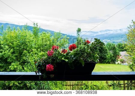 Jardiniere With Geranium Flowers At Balcony And Panoramic View With Gura Humorului In The Background
