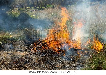 Burning Dry Grass. Wildfire Due To Hot Windy Weather. Concept - Careless Behavior With Fire, Ecologi