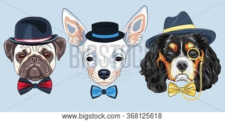 Set Of Hipster Dogs In Hats And Bow Ties. King Charles Spaniel With Gold Monocle, Chihuahua And Fawn