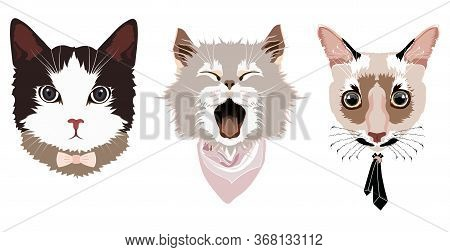 Portraits Of Three Cats: A Cat With A Bow Tie, A Cat With A Scarf, A Cat With A Tie, Sketch Vector G