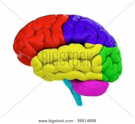 Colored Brain
