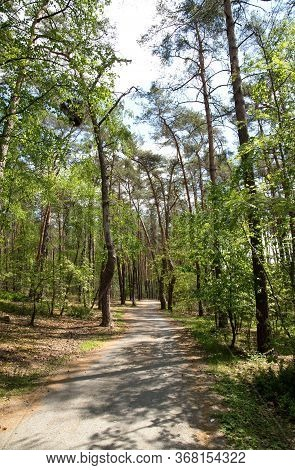 Forest Path In A Pine Forest On The Shores Of Macha Lake, Czech Republic, Alley, Sky With White Clou