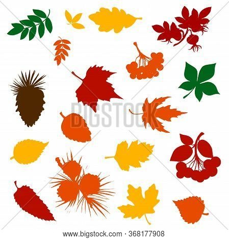 Autumn Fallen Leaf Colour Silhouettes With Forest Tree Fruits, Berries And Pinecones. Fall Nature Se