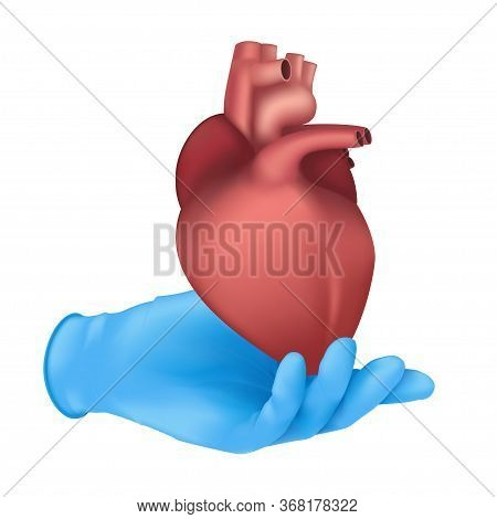 Realistic Medical Organ Concept With A Hand In A Blue Rubber Glove Holding A Human Heart Internal Bo