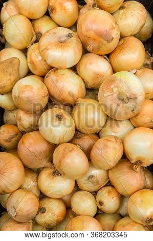Fresh Onions In Market. Pile Of Onions In Bright Sunlight.onions Big Golden On The Counter Market. P