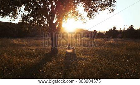 Active, Activity, Animal, Autumn, Beautiful, Caucasian, Concept, Cute, Dog, Family, Female, Freedom,