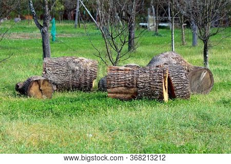 Large Old Wooden Log Cut Into Big Pieces And Left In Family House Orchard For Later Use Surrounded W