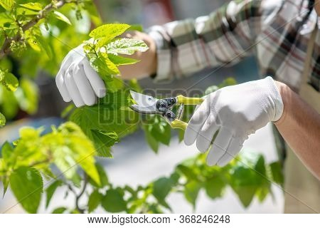 Close-up Of Male Hands In Protective Gloves Trimming Tree Outside