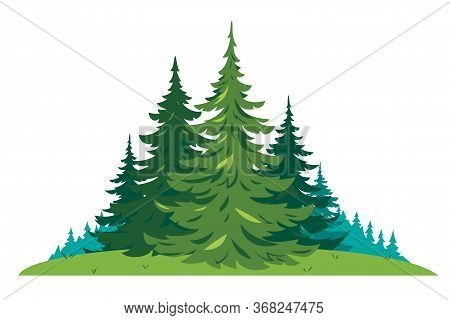 Composition Of Several Spruces Trees On Green Meadow In Front View Isolated, Green Dense Spruce Fore