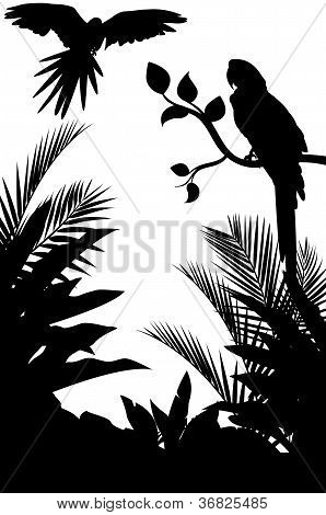 beauty silhouette of macaw and forest background