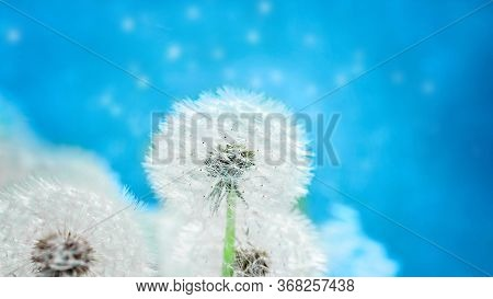 Dandelion At Blue Background. Freedom To Wish. Seed Macro Closeup. Goodbye Summer. Hope And Dreaming