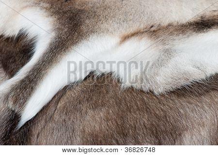 Reindeer Skin.