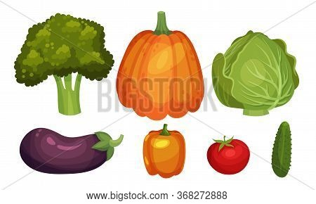 Mature Vegetables With Broccoli And Pumpkin Vector Set