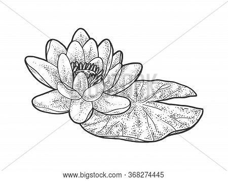 Lotus Nelumbo Water Lily Flower Sketch Engraving Vector Illustration. T-shirt Apparel Print Design.