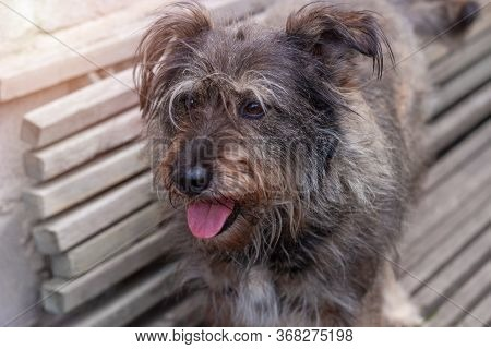 Street Homeless Mongrel Shelter. A Dog Sitting On A Wooden Bench Outdoor. Care For Long Fur Animals.