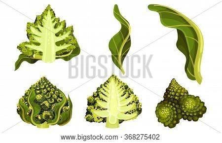 Romanesco Broccoli Or Roman Cauliflower With Spiral Inflorescence Vector Set