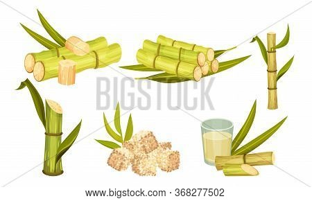 Sugar Cane Unbranched Stems With Leaves And Superfood Like Brown Granulated Sugar Vector Set