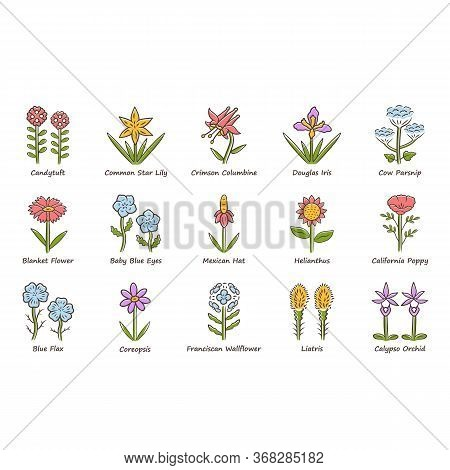 Wild Flowers Color Icons Set. Spring Blossom. California Wildflowers With Names. Garden Blooming Pla