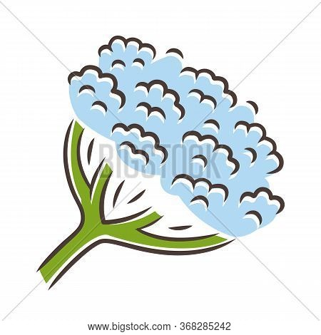 Cow Parsnip Blue Color Icon. Hogweed Blooming Flower. Herbaceous Plant. Heracleum Maximum. Indian Ce