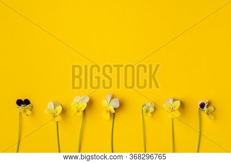 Pansy Flower On Yellow Blank Paper Page For Greeting Message. Top View, Flat Lay, Copy Space
