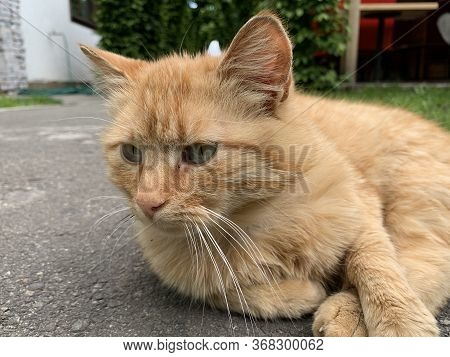 The Red Cat Lies And Basks In The Sun. The Cat Is Resting On A Track In The Yard. The Animal Is Slee