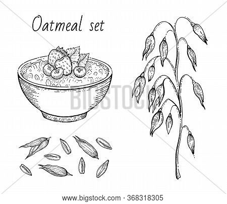 Oats Sketch. Oatmeal Porridge Bowl With Milk, Fruit, Oat Ear, Grain. Engraved Icon Art. Line Muesli,