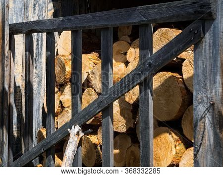 Thick Pine Logs Close-up. Wood Billets On The Sawmill. Woodpile With Coniferous Wood