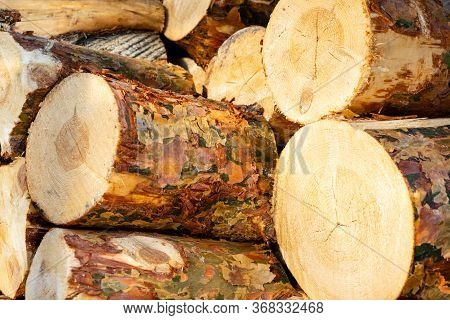 Thick Pine Logs Close-up, Background Texture. Wood Billets On The Sawmill. Woodpile With Coniferous