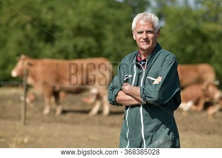 Farmer leaning on fence, cattle in background