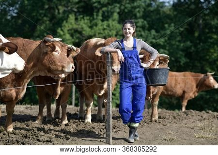 Farmer apprentice feeding cattle in barnyard
